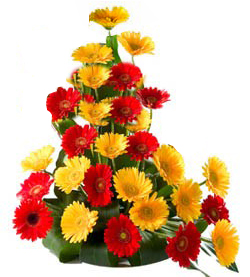 One Side Arrangement of 20 Mix Colour Gerberas send-flower-Goraguntepalya