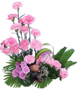 One Side Arrangement of 20 Pink Carnations