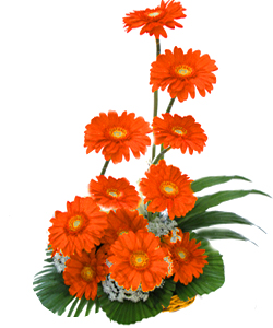 One Side Arrangement of 12 Orange Gerberasend-flower-basavaraja-market