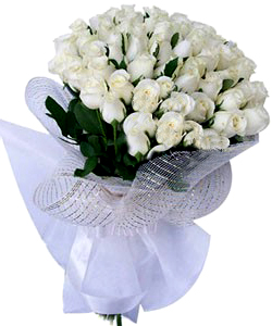 Bunch of 50 White Rose in Net Packing